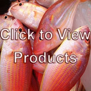 Wet Seafood Fresh Products